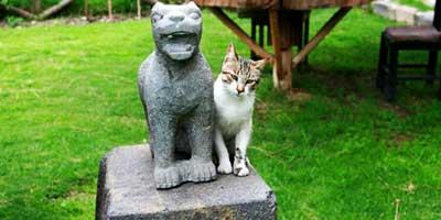 Ольянтайтамбо ягуар и кот