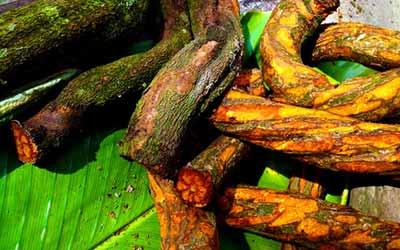 Аяхуаска медицина