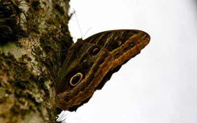 Обращение бабочка