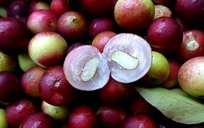 Каму Каму ягода