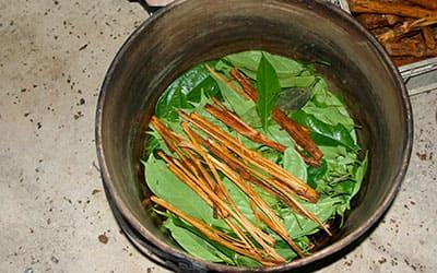 Приготовление Ayahuasca Эквадор