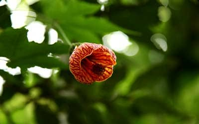 Рождение жизни в цветке