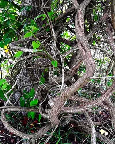 ayahuasca в шаманском центре
