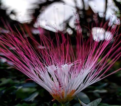 Цветок в Эквадоре