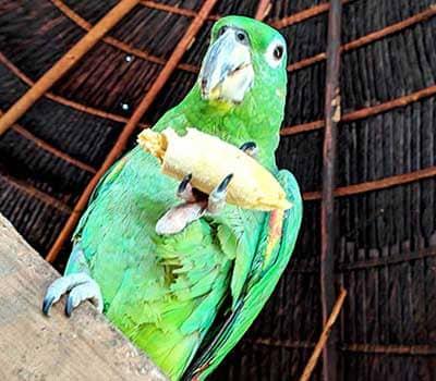 Попугай на церемонии