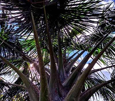 equador-palmeras