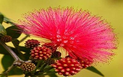 flores-peru