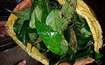 preparada-ayahuasca