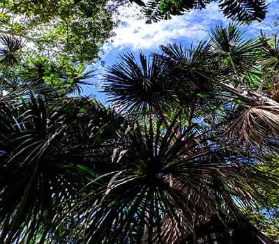 selva-equador