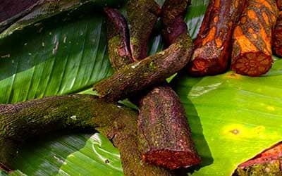 ayahuasca-de-espera