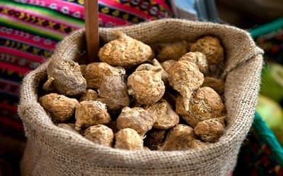 maca-peruvian