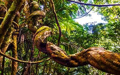 ayahuasca-en-vivo