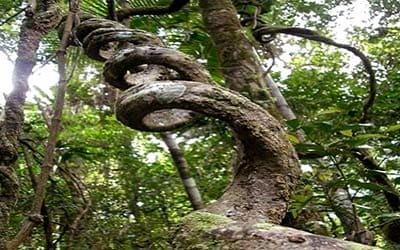 ayahuasca-espiral