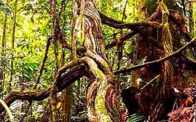arbol-de-selva