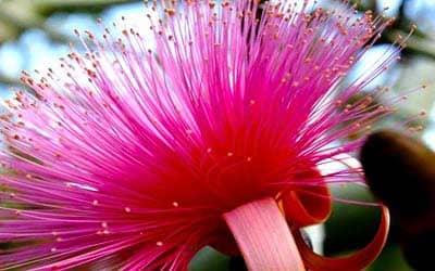 flor-de-selva