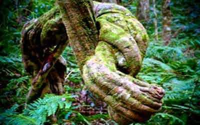 medicina-selva