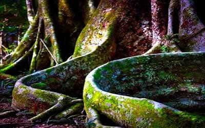 raíces-de-arbol
