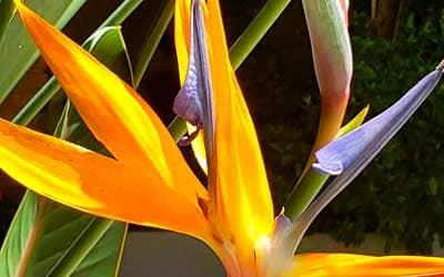 selva-flower