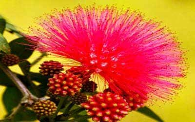 vida-flor