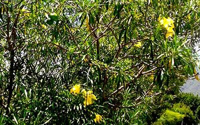 camalonga-flores